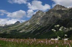 Zwitserse alpen: De flora rond de gletsjer-meren in Engadin royalty-vrije stock afbeelding