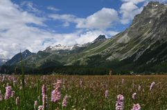 Zwitserse alpen: De flora rond het gletsjer-meer royalty-vrije stock afbeeldingen