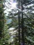 Zwitserse Alpen in de zomer Stock Foto