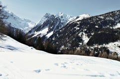 Zwitserse Alpen en bossen royalty-vrije stock afbeelding