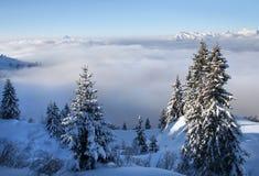 Zwitserse Alpen met één of andere boom Stock Afbeeldingen