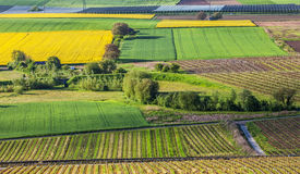 Zwitserse Landbouwgrond II stock afbeeldingen