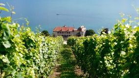 Zwitserse wijngaard Stock Afbeelding