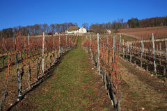 Zwitserse wijngaard Stock Foto