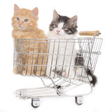 Zwo kitten in shopping cart Royalty Free Stock Photos