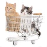 Zwo kitten in shopping cart Royalty Free Stock Photos