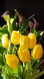 Zwodniczy tulipany Fotografia Royalty Free