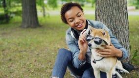 Zwolnione tempo śliczny shiba inu pies w okularach przeciwsłonecznych siedzi na trawie w parku i swój kochającego właściciela ład zbiory