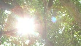 zwolnione tempo światło słoneczne przez liści zielony drzewo przy zmierzchem w Taipei zbiory