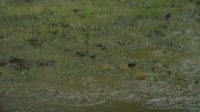 Zwolnione Tempo deszczu pluśnięcie zbiory wideo