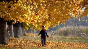Zwolnione tempo dzieciaka bieg przez spadać liści pod jesień koloru żółtego drzewami zdjęcie wideo