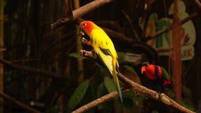 Zwolnione tempo kamerzysty mknące papugi je w birdcage zdjęcie wideo