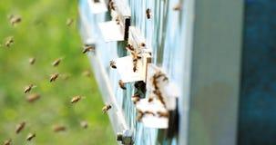 Zwolnione tempo Miodowy pszczoły latanie wokoło ula z zamazanym tłem beekeeping zbiory wideo