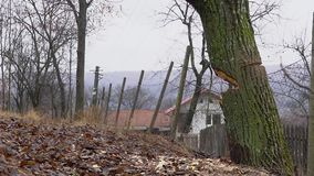 Zwolnione tempo powalać drzewa zbiory