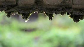 Zwolnione tempo wody krople zbiory