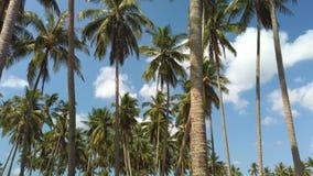Zwolnione tempo wysocy kokosowi drzewa z biel niebieskimi niebami i chmurą zbiory