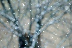 Zwolnionego tempa śnieżny spadać z drzewnym tła miasta bokeh Fotografia Royalty Free