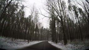 Zwolnionego tempa jeżdżenie przez lasowej drogi zdjęcie wideo