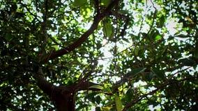 Zwolnionego tempa piękny światło słoneczne przez liści zielonych drzew w parku Taipei zbiory