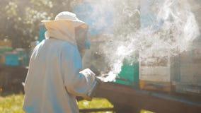 Zwolnionego tempa wideo pasieka mrowie pszczół komarnicy w rój zbiera pollen niedźwiedzia miód beekeeping pojęcia pszczoła zbiory