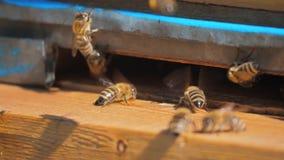 Zwolnionego tempa wideo pasieka mrowie pszczół komarnicy w rój zbiera styl życia pollen niedźwiedzia miód Beekeeping pojęcie zdjęcie wideo
