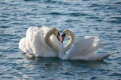 Zwom op het overzees in de vorm van een hart stock fotografie