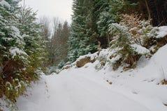 Zwrot droga na wzgórzu w zwartym iglastym śnieżnym lesie w dzikim Zdjęcia Royalty Free
