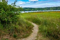 zwrot w ścieżce przez wysokiej trawy obraz royalty free
