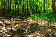 Zwrota strumień w lesie Fotografia Royalty Free