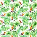 Zwrotników liście, egzotyczni ptaków kwiaty deseniowy target101_0_ akwarela royalty ilustracja
