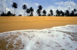 zwrotnik na plaży Zdjęcie Royalty Free