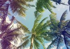 Zwrotnik palmy, stonowana fotografia Zdjęcie Stock