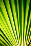 Zwrotnika palmowy liść w makro- obrazku z abstrakcjonistycznymi liniami Obraz Stock