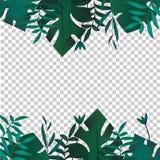 Zwrotnika sztandar pojęcia projekta restauraci szablon Tropikalna liść granicy rama z pustą przestrzenią Reklama, ulotka, tło royalty ilustracja
