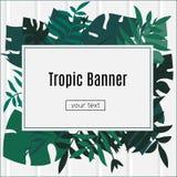 Zwrotnika sztandar pojęcia projekta restauraci szablon Tropikalna liść rama z pustej przestrzeni papierem Reklama, ulotka, tło ilustracja wektor