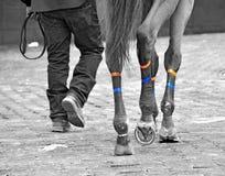 Zwycięzcy spaceru akweduktu tor wyścigów konnych zdjęcia stock