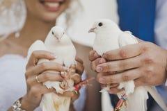 Zwyczaj laszowanie gołąbki przy ceremonią fotografia royalty free