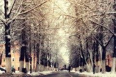 Zwyczajna drogi przemian drzewa zima Obrazy Royalty Free