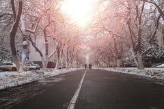 Zwyczajnego sposobu drzewa zima Zdjęcia Royalty Free