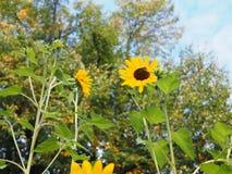 Zwyczajny skrzyżowanie w jesieni na słonecznym dniu obrazy royalty free
