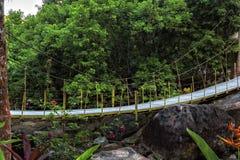 Zwyczajny zawieszenie most nad rzeką w tropikalny las deszczowy obrazy royalty free
