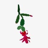 Zygocactus icon isolated vector illustration