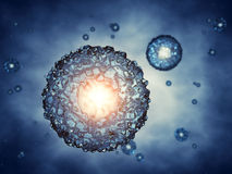 Zygote Stock Photography