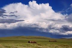 Zylinderförmige Rollen des Heus auf dem Hintergrund des bewölkten Himmels Stockfoto
