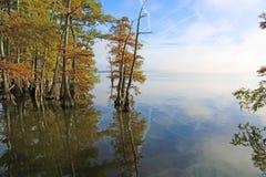 Zypresse-Bäume auf Reelfoot See Stockfotografie