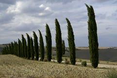 Zypresse-Bäume in der italienischen Landschaft Stockbilder