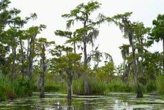Zypresse-Bäume in einem Bayou lizenzfreies stockbild