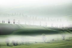Zypresse-Bäume im Nebel stockfotografie