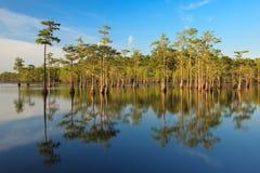 Zypresse-Bäume im Sumpf Stockbilder