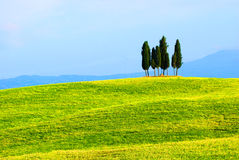 Zypresse-Bäume und grüne Felder stockbilder